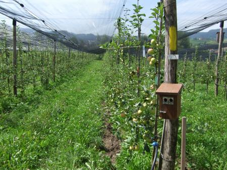 Nachhaltige Äpfel