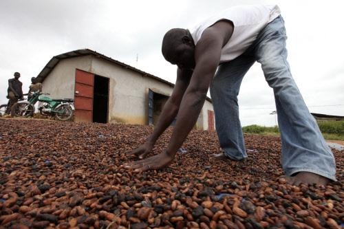 ivoirischer kakao die bauern und die parallelen adi 39 s agro blog. Black Bedroom Furniture Sets. Home Design Ideas