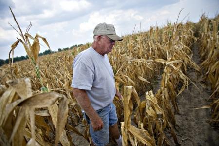 Ein Farmer aus Illinois besichtigt die Schäden in seinem Maisfeld