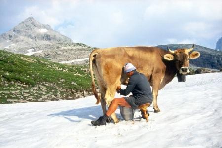 Milchmarkt im Winter