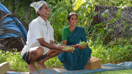 Guruswami and wife Shanta scooping handfuls of algae from their pond