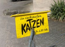 Katzen in Aktion