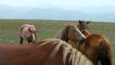Pferde in Umbrien
