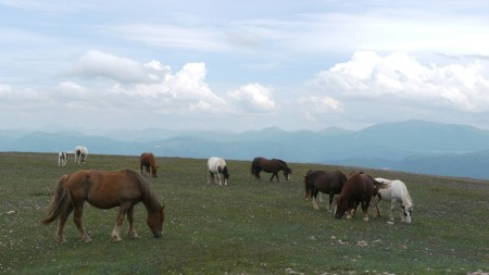 Pferde mit Himmel auf dem Monte Subasio