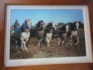 Damian am Säen mit sechs Pferden