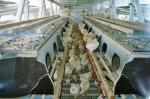 Hühnermobil Innenansicht