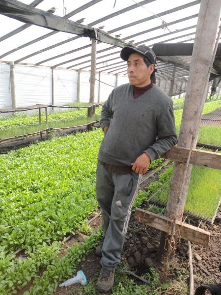 Hector der Gemüseproduzent