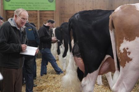 Viehschau Langnau Notizen klein