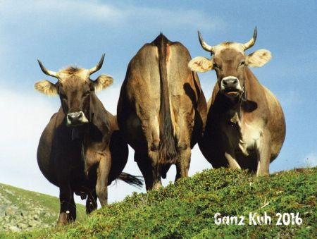 Ganz Kuh