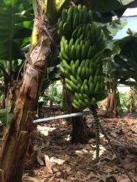 Bananen für Blog